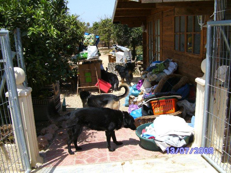 hunde dobermann kaufen im kreis düren