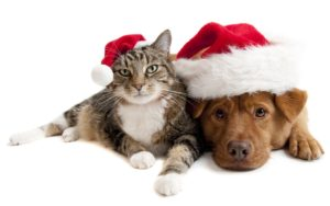 christmas-cat-and-dog_1920x1200