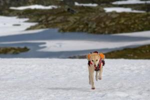 od-2016-hardangervidda-trekking-5b